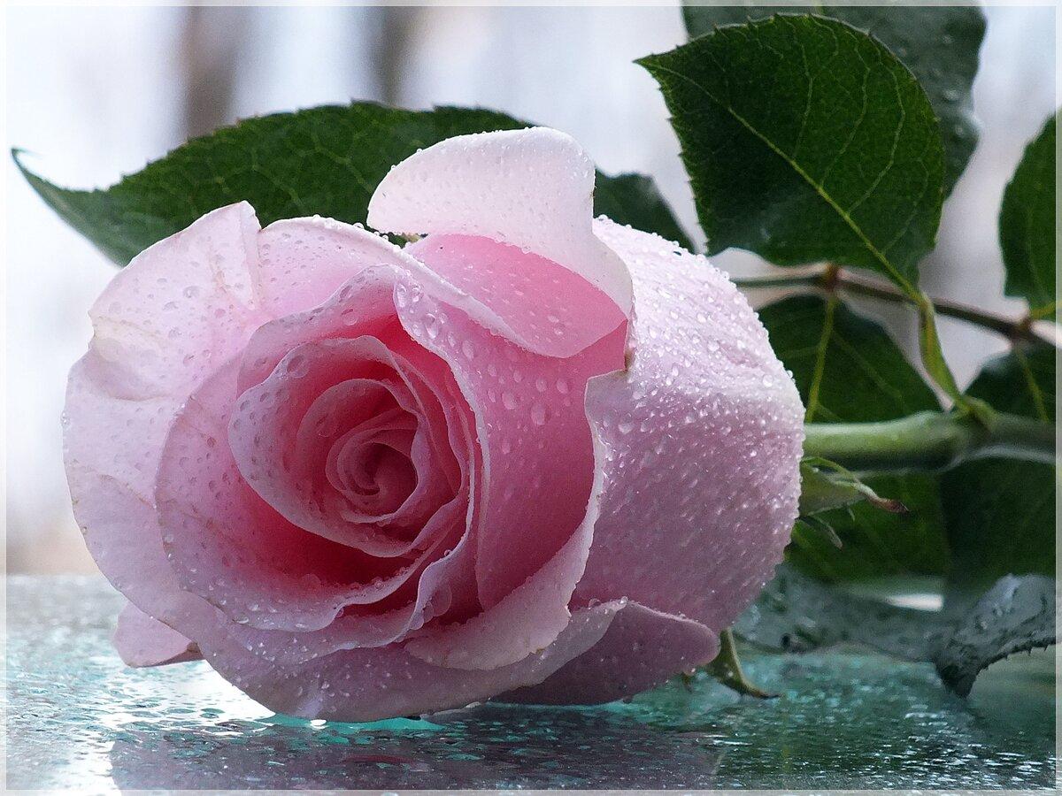 Открытка розы красивые гиф, которые легко