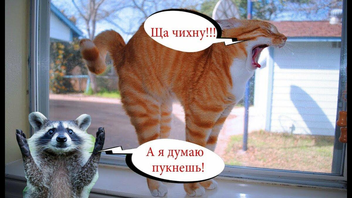 Самые смешные котики до слез с озвучкой, открытки