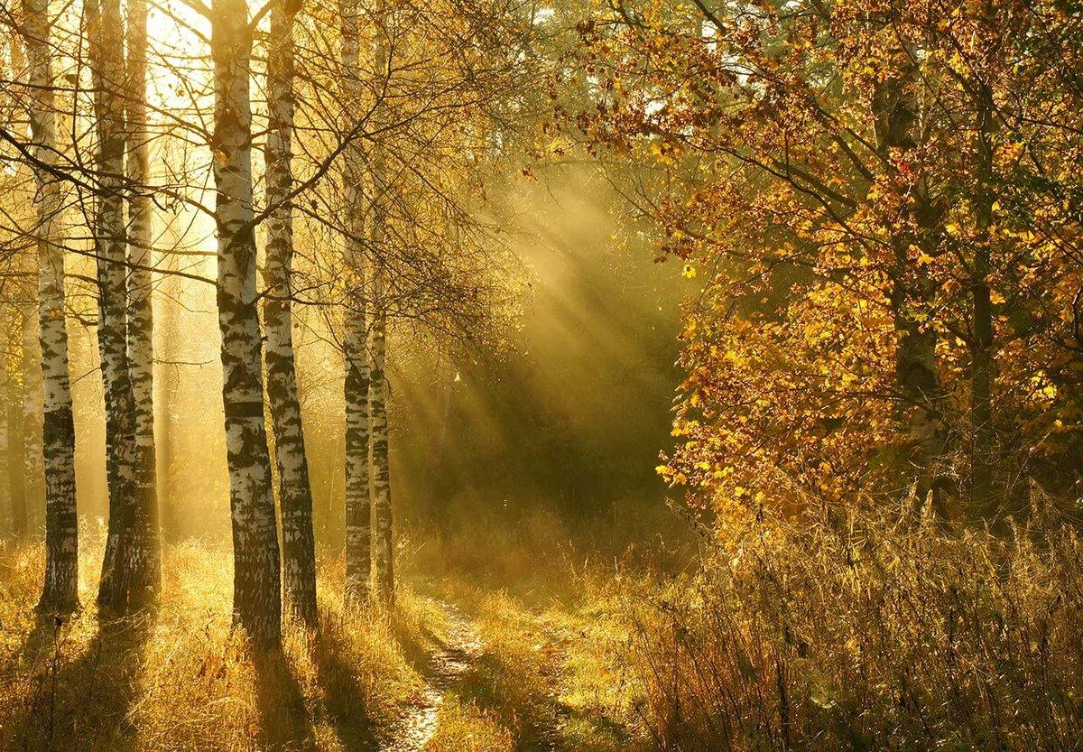 достаточный картинки осенний парк и солнечные лучи еще много позитива