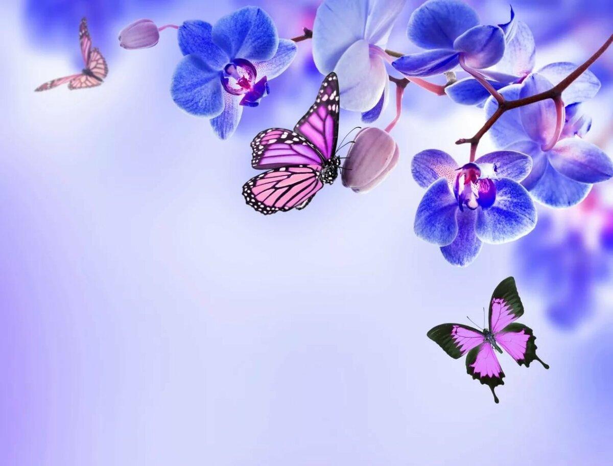 Открытка с бабочками красивая, старшему брату днем