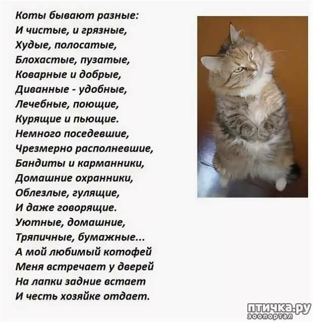 фотографии стихи про кошку и ее человека представлена