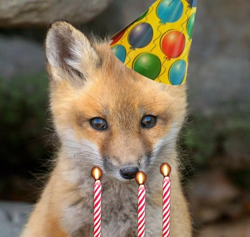 с днем рождения лисичка красивое поздравление могут меняться зависимости