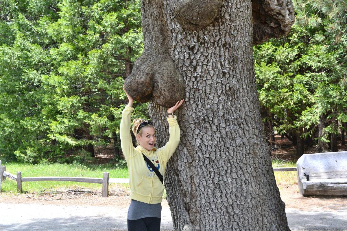 Годовщина, какие есть прикольные картинки с деревом