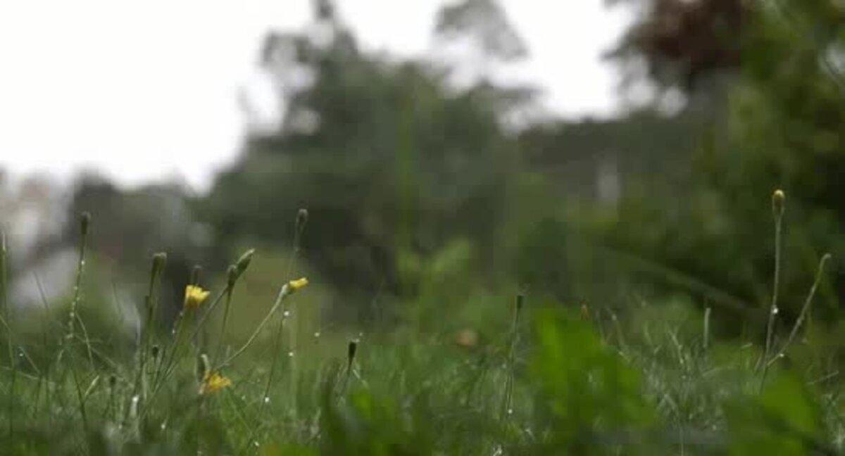 Картинка гиф трава, днем