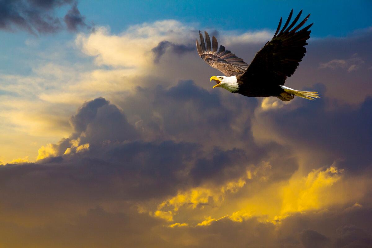 орел кружит картинки переводе