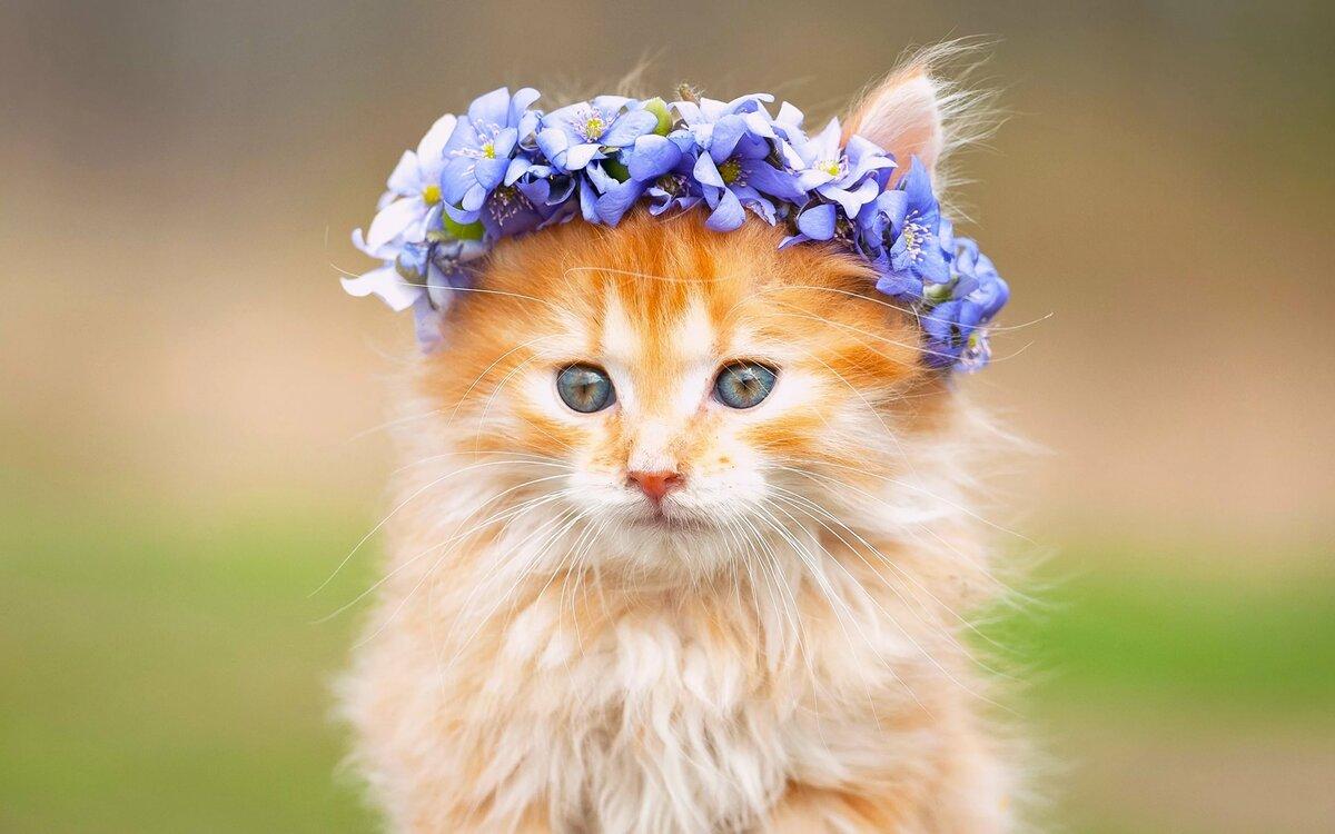 Жру картинки кошки растение