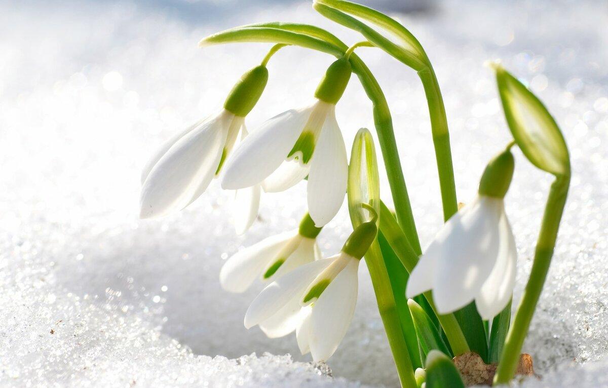 Картинки весна на стол