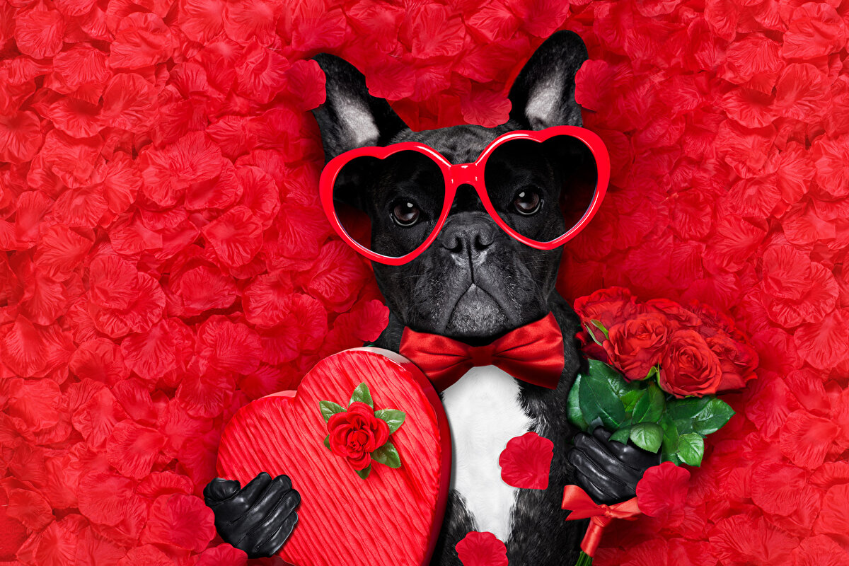 Букеты с днем святого валентина картинки приколы, трех роз эустомы