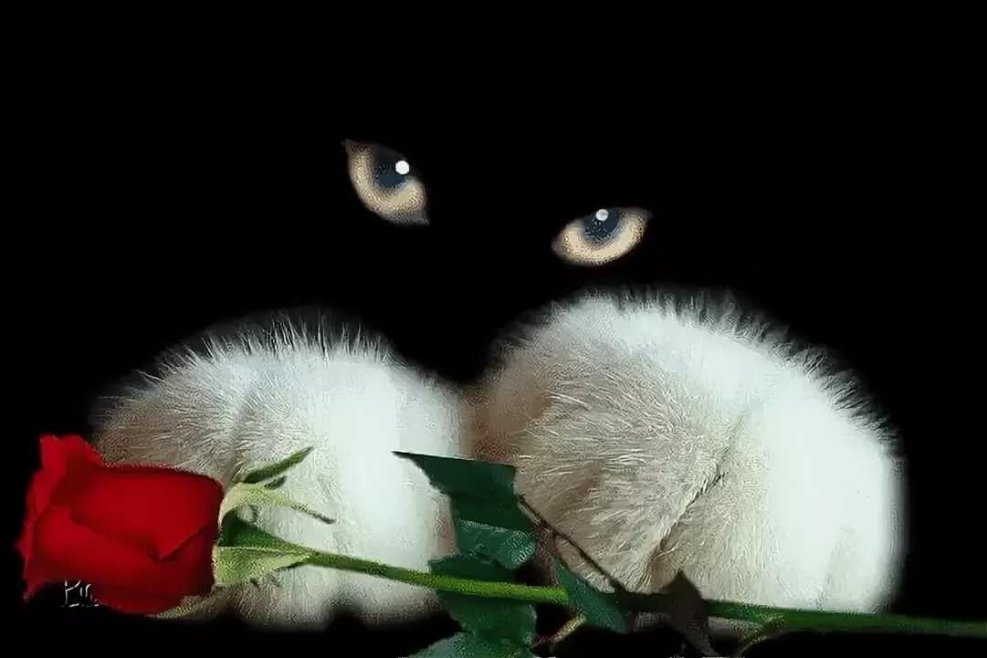 Красивые открытки с добрым вечером с котиками живые, телефон голосовую
