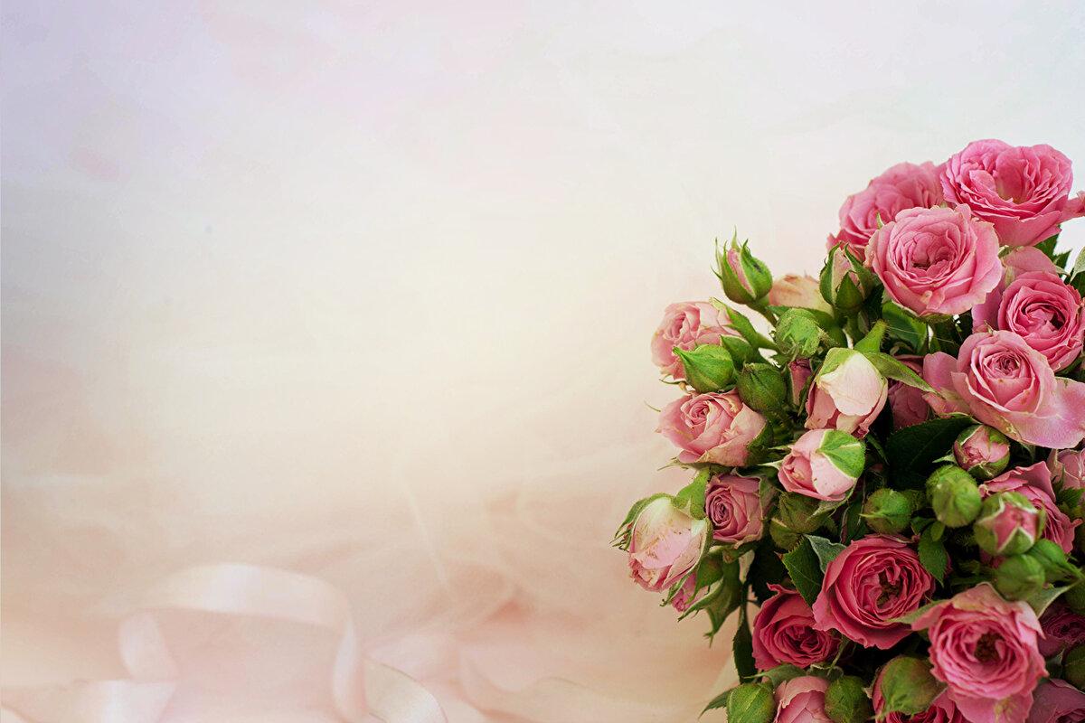 фон на открытку с розами все
