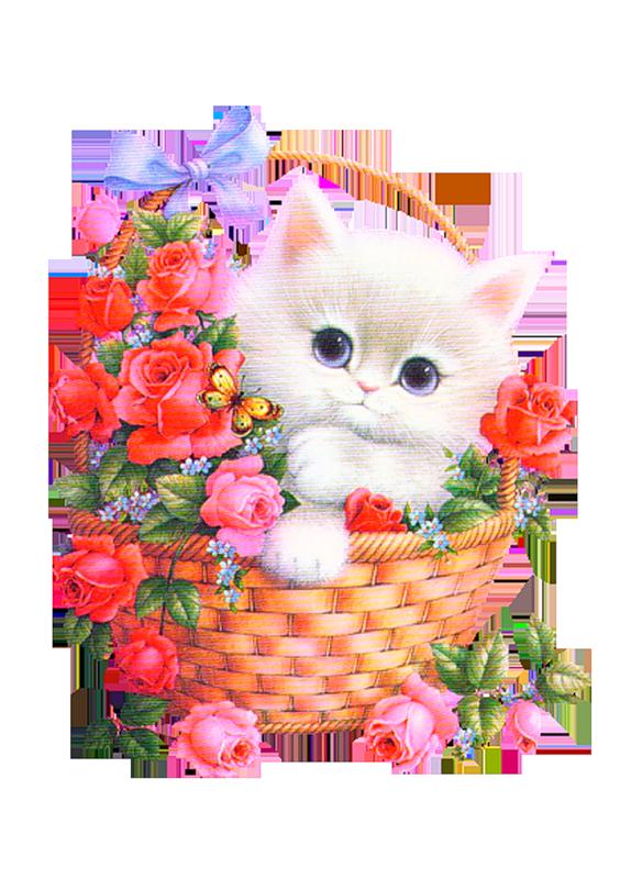 забытый картинки анимации котик с цветами обои
