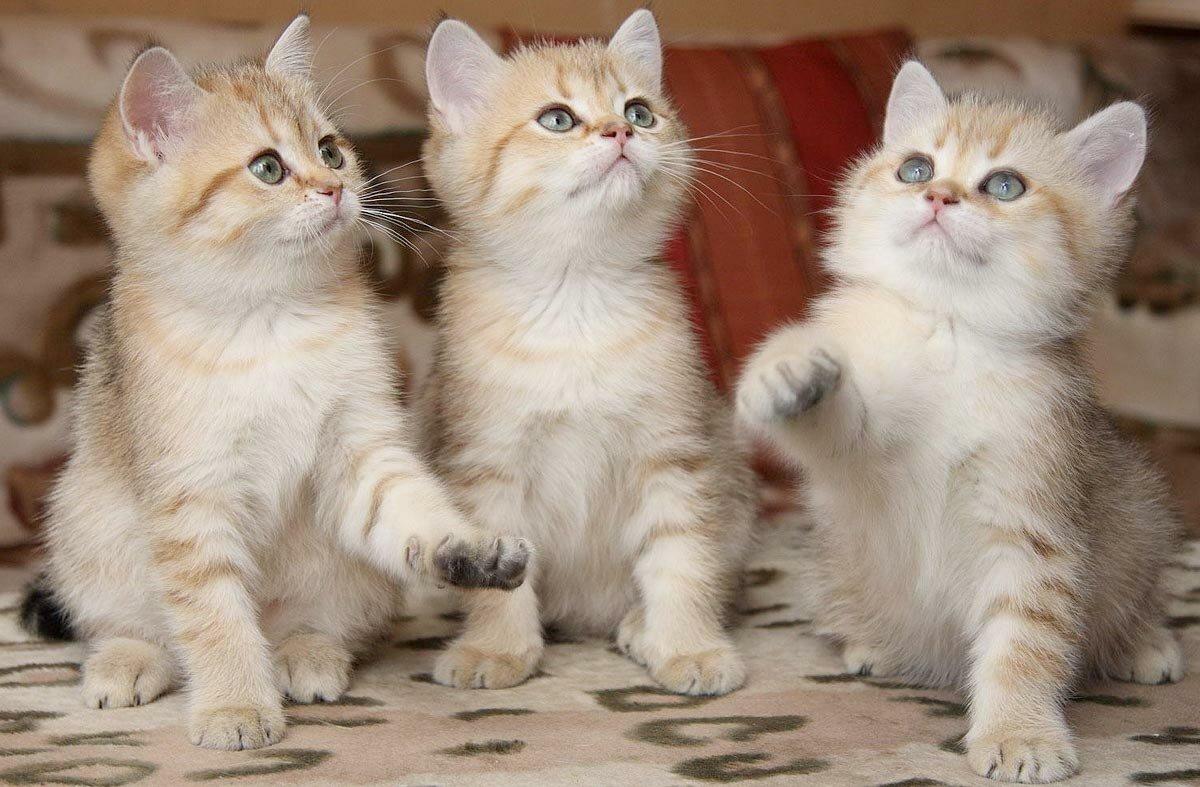 посмотреть картинки всех котят как выяснилось при