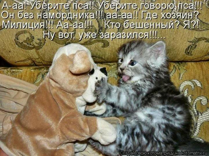 Милые картинки смешные с надписями, добрыми пожеланиями хорошего