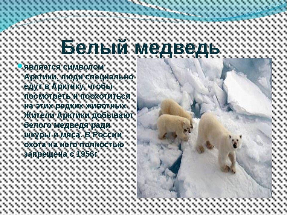 два север европейской части россии интересные факты твой жизненный