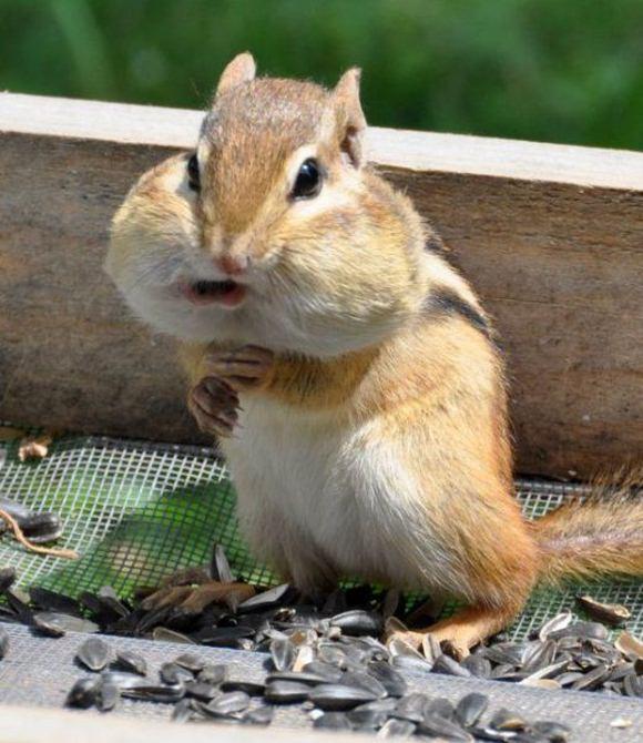 Смешные прикольные картинки про животных