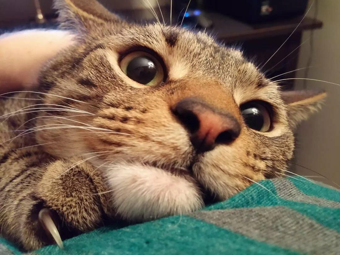 Картинки смешные коти, днем рождения