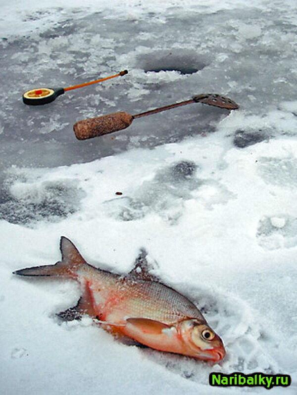 Рыбалка зима лещ поплавок