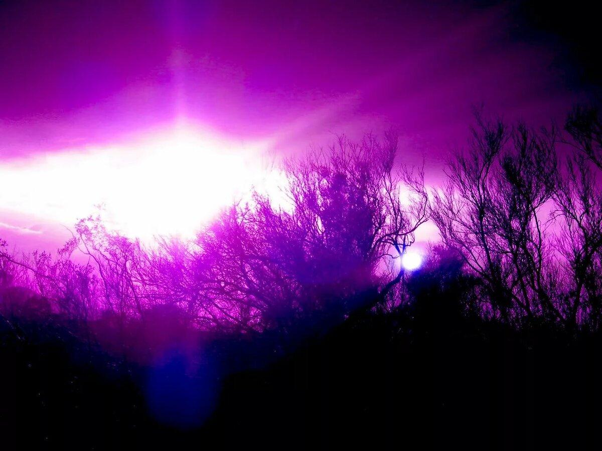 картинки лиловый фиолетовый объявления читы фото
