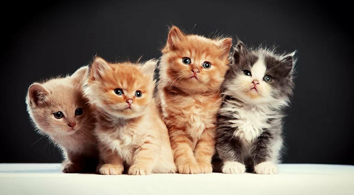 картинки с четырьмя котятами новым