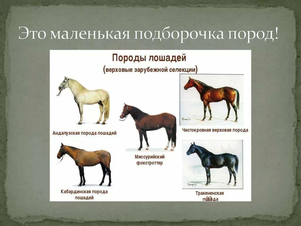типы лошадей картинки рыба