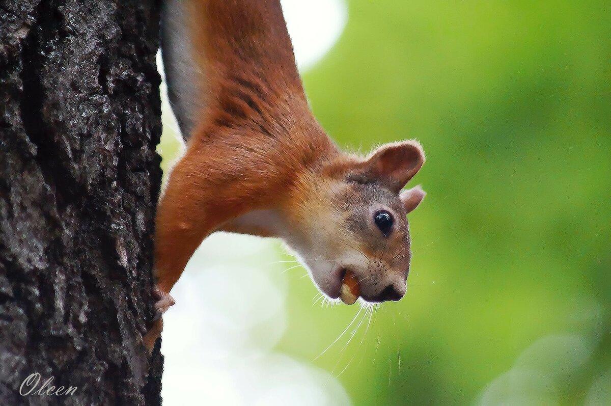 У кого еще орешки есть?