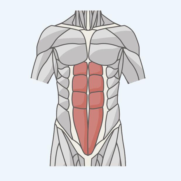 Мышцы пресса картинки