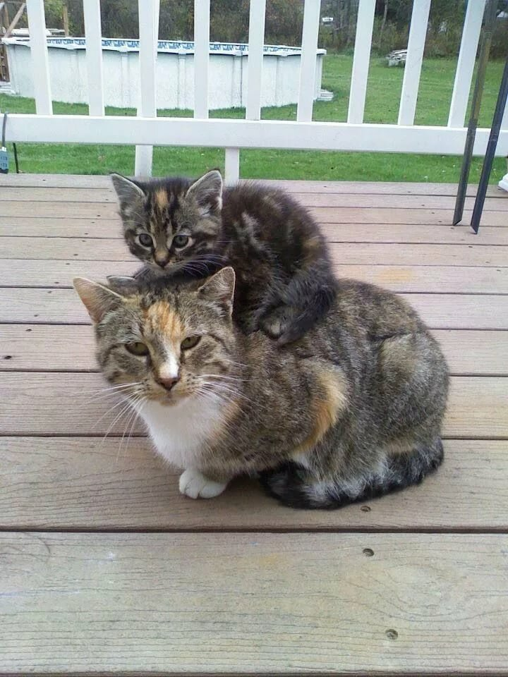 Pin by Shelly Colman on My Furry Friends Pinterest Kedi, Sevimli kediler and Yavru kediler