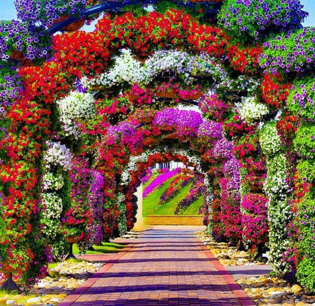 Красивый сад с цветами фото