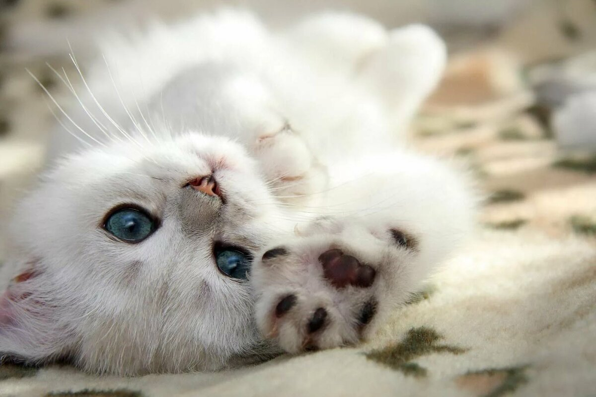 Картинки скучаю коты