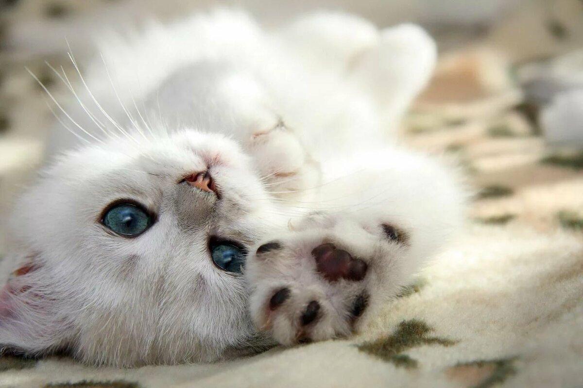 Открытка котики скучаю