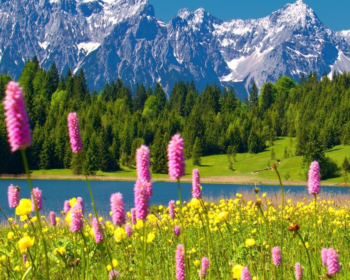 Ники картинки, картинки горы и цветы красивые