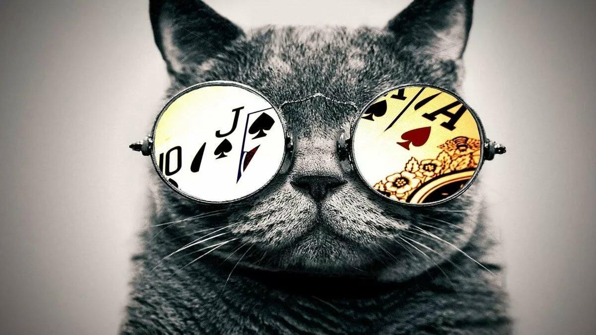 Прикольные картинки на аву коты