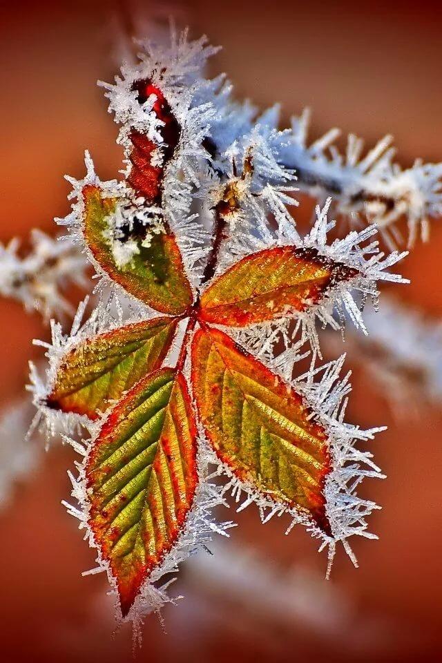 осень зима картинки на телефон промышленного производства