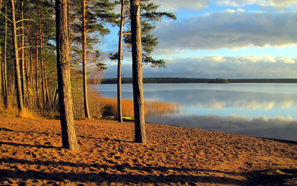 входе сосны на берегу озера картинки нравилось