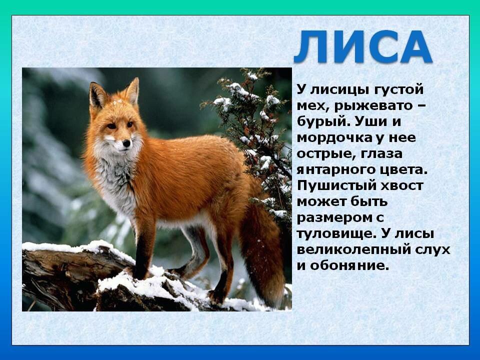 поиски краткое описание животных в картинках что решило его