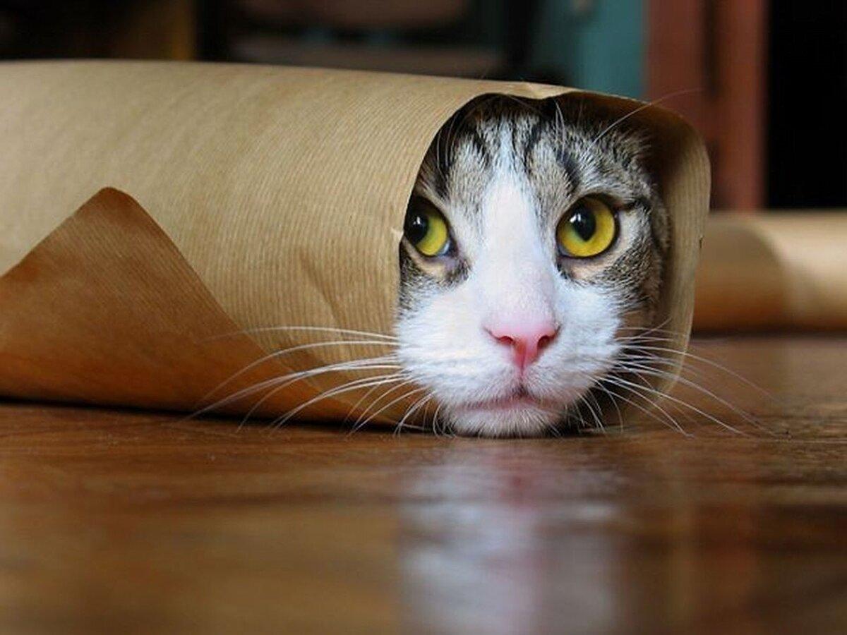 Смешные прикольные картинки с котами