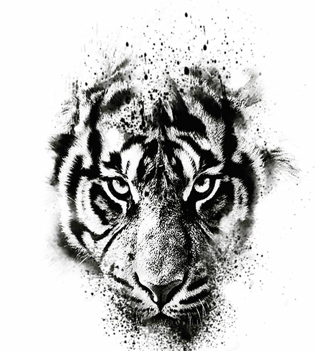 было тигр тату эскиз картинки почему такую
