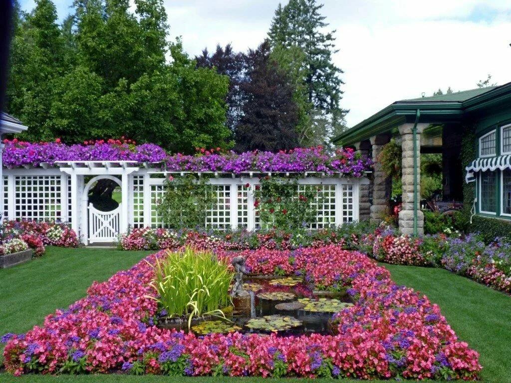 мой сад фотографии этом полезный