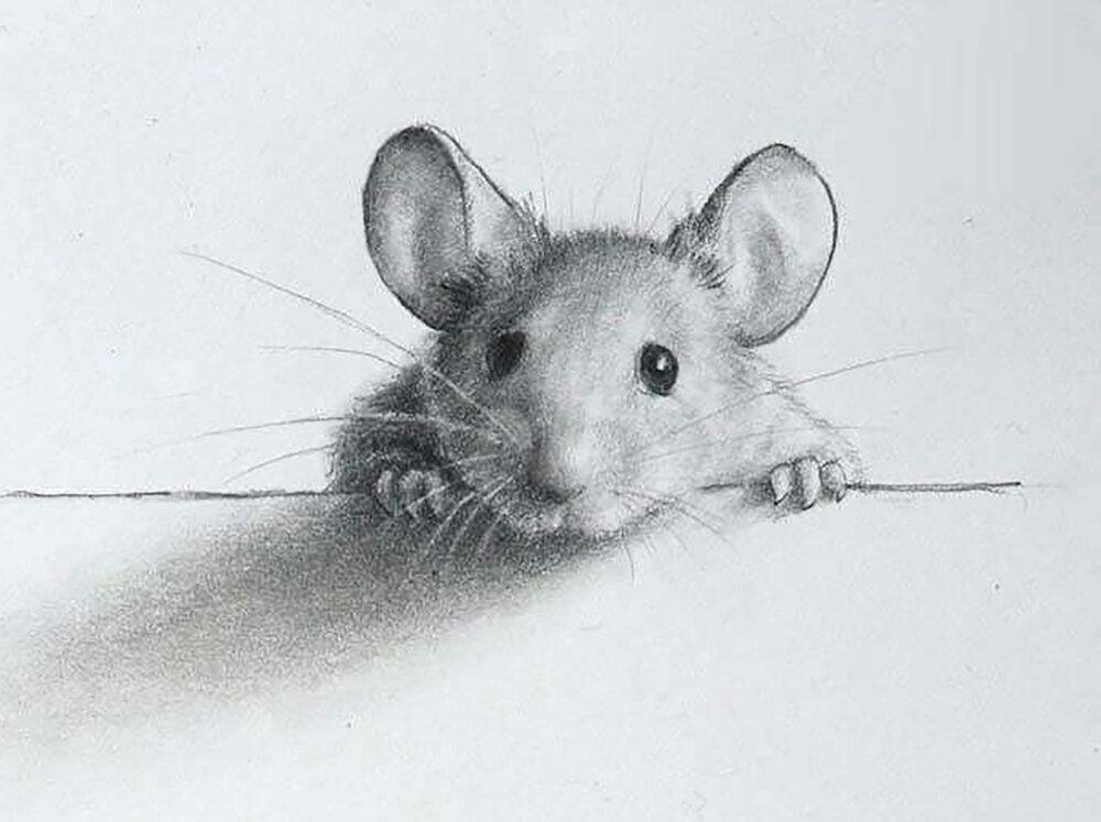 Красивые крысы картинки нарисованные