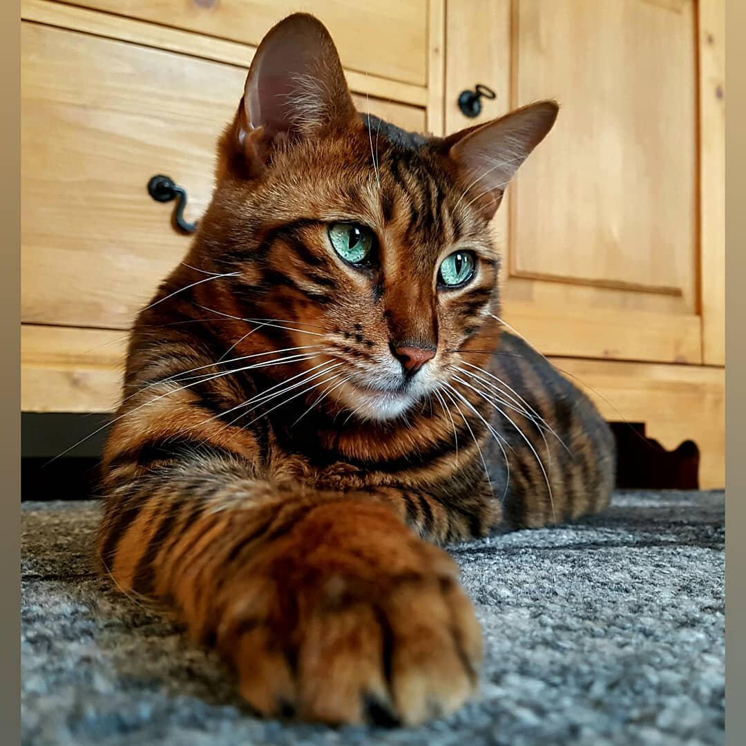 Породы котов всего мира картинки