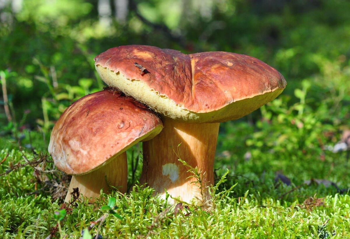 Картинки в виде грибами