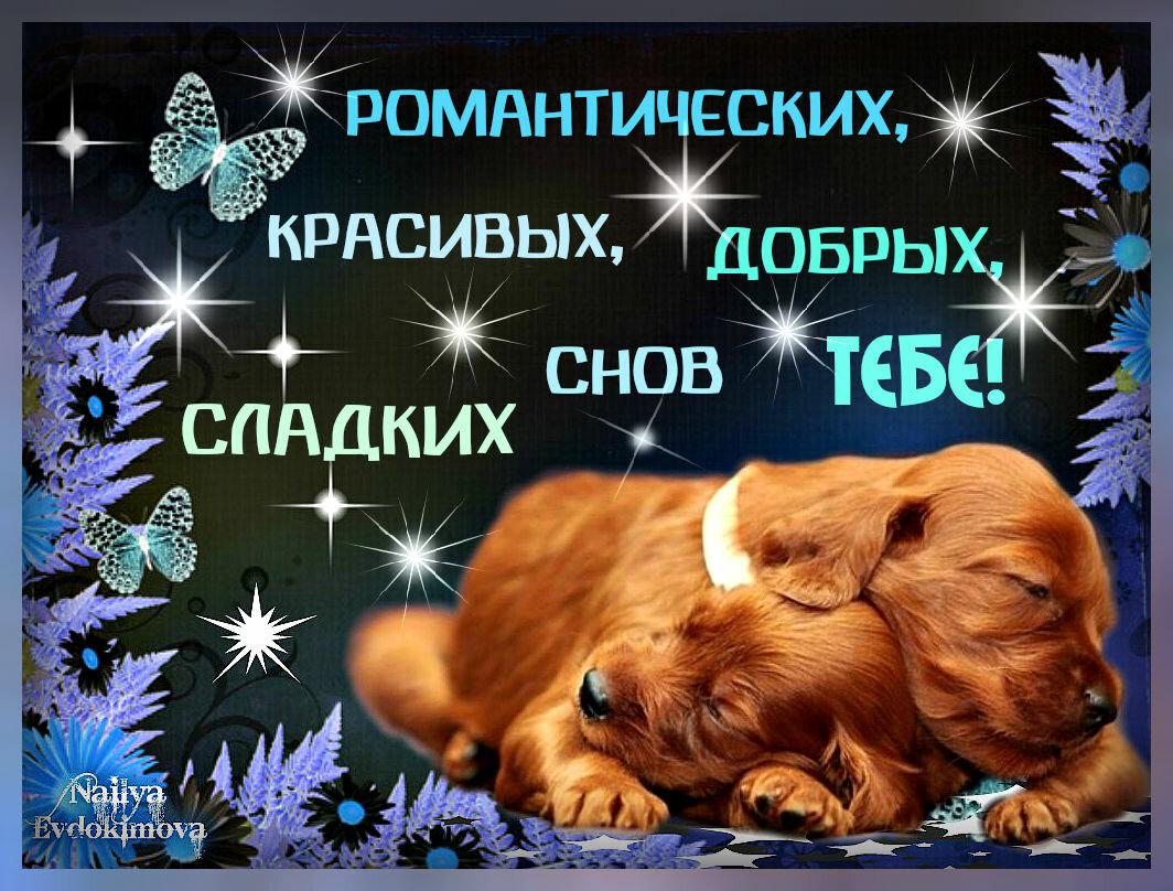 Сладких снов моя душа открытка
