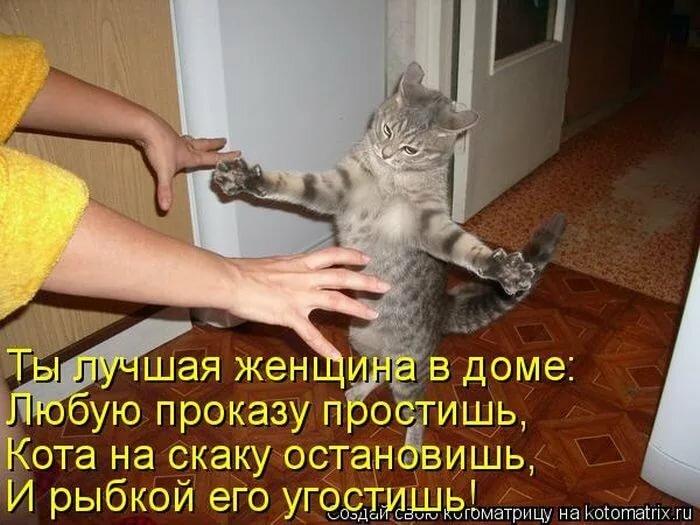 Смешные стихи про кошек в картинках, месяц девочке