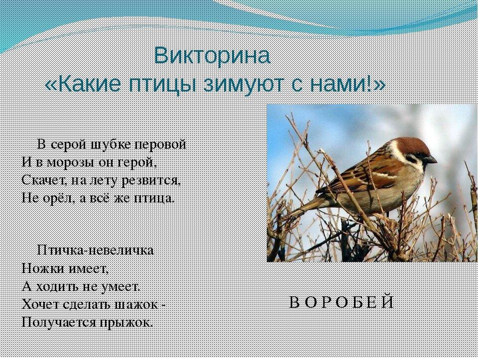 Птицы которые зимуют в беларуси картинки вульф посвятил