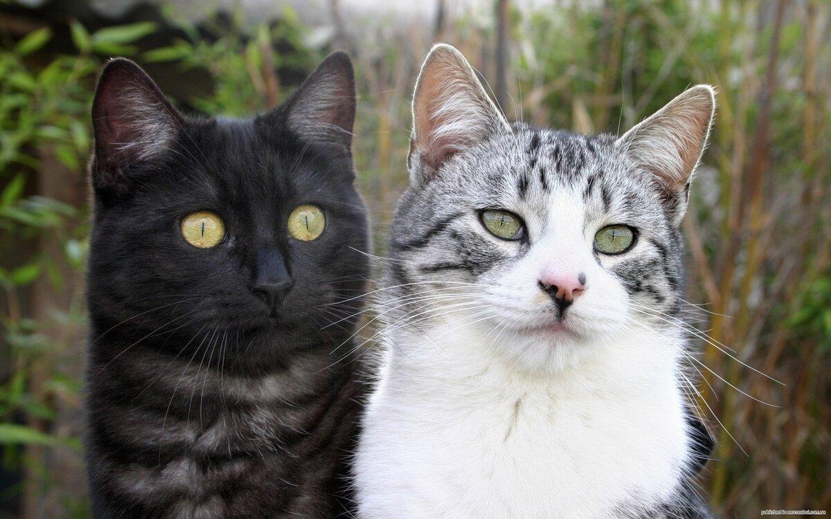 Кот и кошка картинки, надписями смыслом