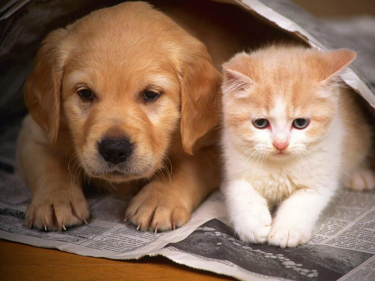 Картинки для рабочего стола кошечки и собачки