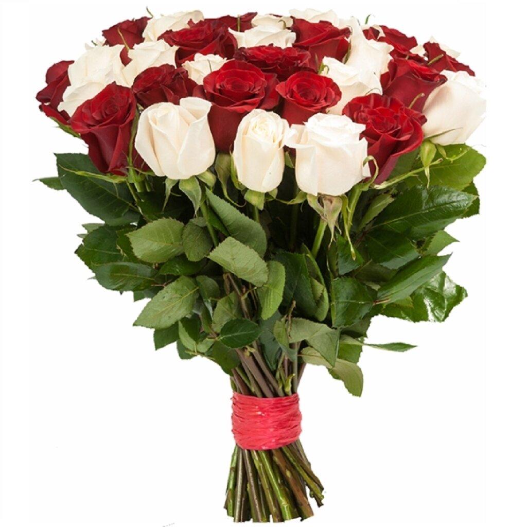 Цветы в днепропетровске купить розы цена