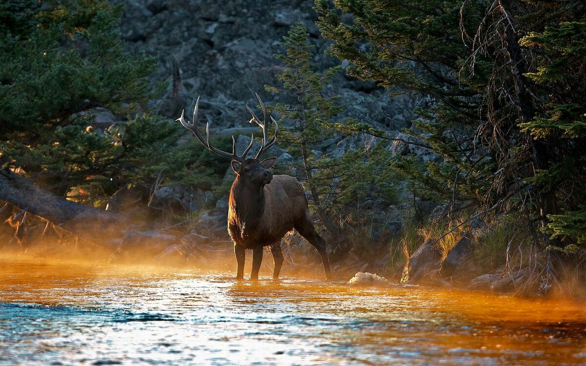 природа картинками и звери простой