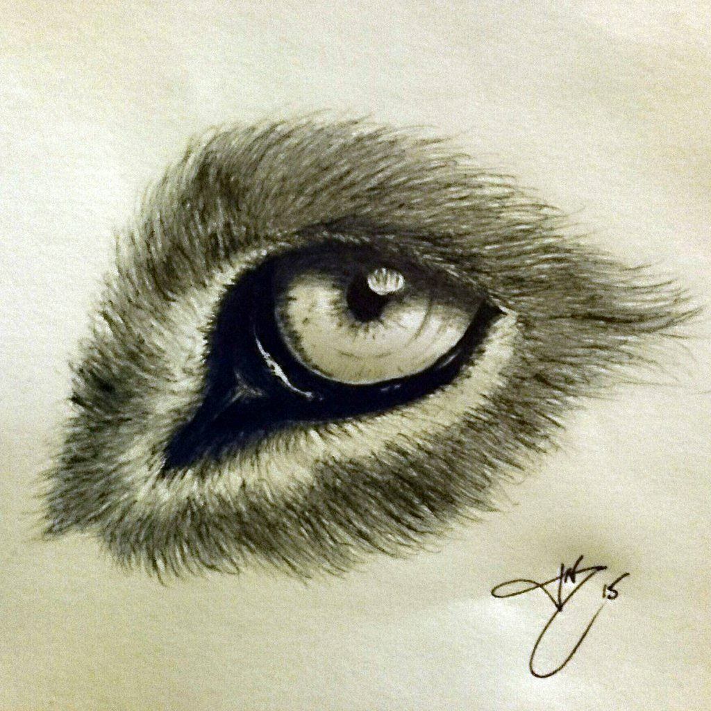 Картинки глаз животных карандашом