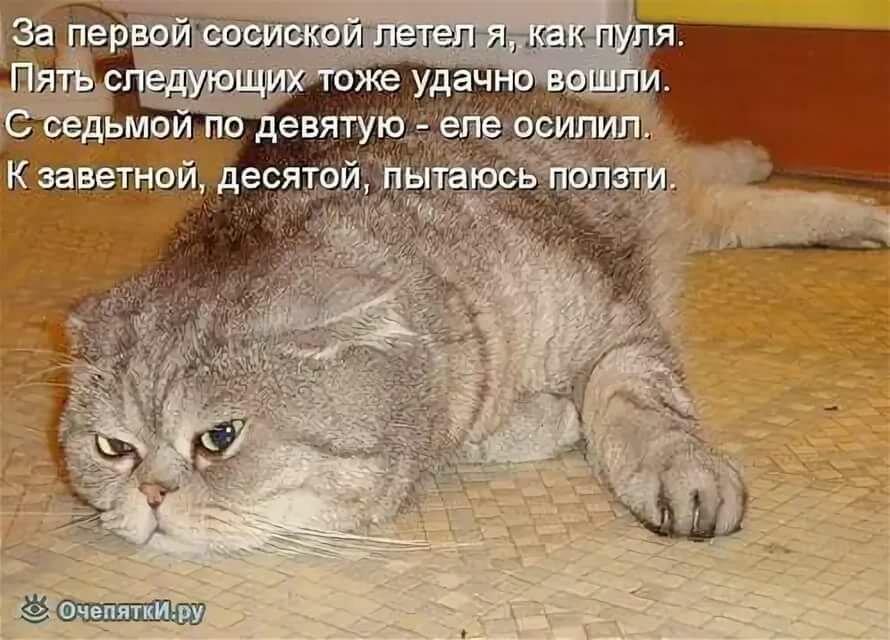 Радость счастье, смешные стихи про кошек в картинках
